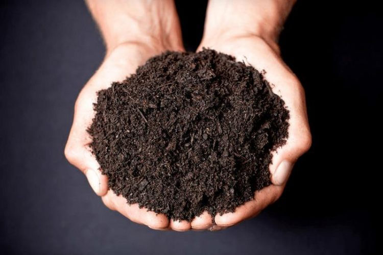 Are you looking around for good quality and cheap soil in Sydney?